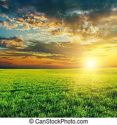 Campo verde de agricultura y atardecer