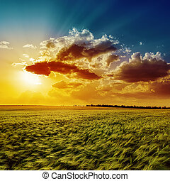 Campo verde de agricultura y atardecer naranja
