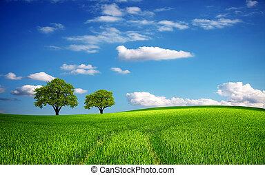 Campo verde en primavera