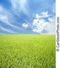 Campo verde y cielo
