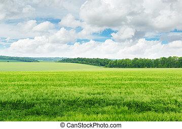 Campo verde y cielo azul