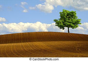 campos, árbol, arado