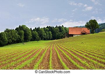 Campos agrícolas