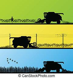 campos, cosecha, vector, grano, combinar, cosechar