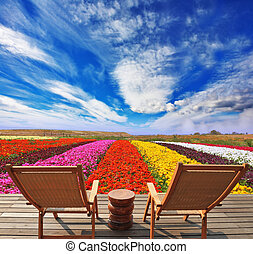 Campos de flores muy brillantes