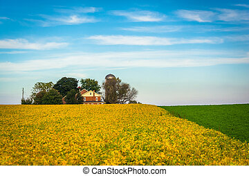 Campos de granja en el condado de Lancaster, Pennsylvania.