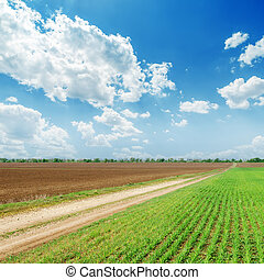 Campos de primavera y cielo azul nublado