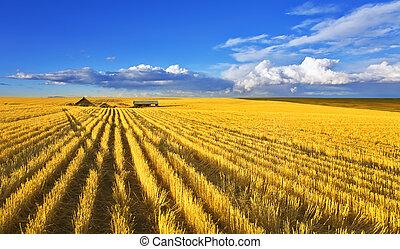 campos, montana, mediodía, solar