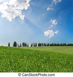 Campos verdes bajo cielo nublado