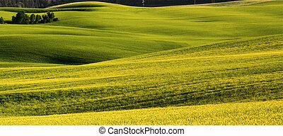 Campos verdes y ámbar y colinas suaves