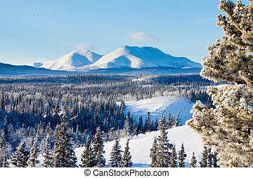 canadá, invierno, nieve, taiga, territorio, paisaje, yukon