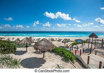 cancun, delfín, playa, panorama, méxico