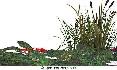 Cane, flores y marsh hierba aislada