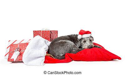 Cansado perro de Santa Claus con regalos de Navidad