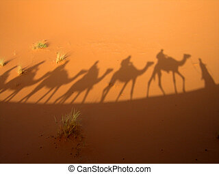 caravana, sombra