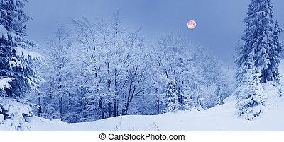 carpathians, bosque, ucranio, nevoso