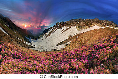 carpathians, rododendros