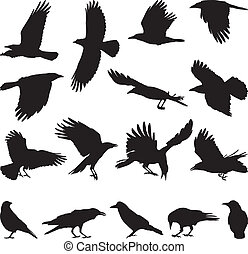 carroña, cuervo