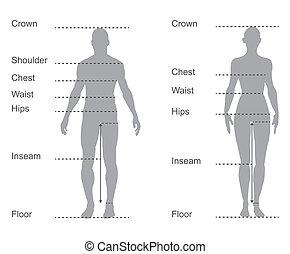 Carta de tamaño, diagrama de medición de cuerpos masculinos y femeninos para ropa