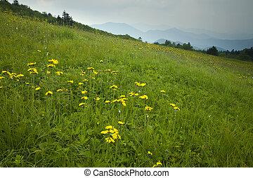carver's, boquete, wildflowers