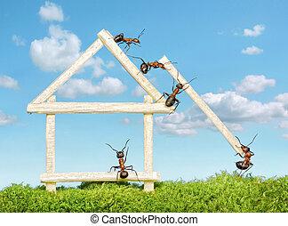 casa de madera, construir, hormigas, equipo