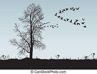 Castañas y gansos salvajes