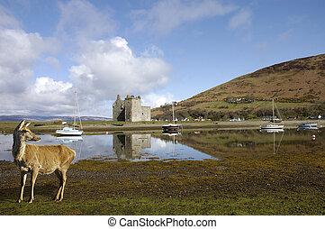 Castillo en Lochranza en Escocia