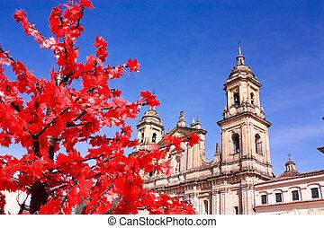 Catedral de la ciénaga, Colombia