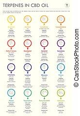 cbd, aceite, infographic, vertical, empresa / negocio, fórmulas, estructural, terpenes
