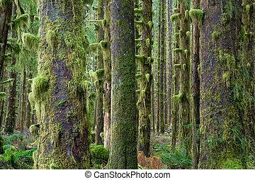 Cedros, bosques profundos, el musgo verde cubría la selva tropical