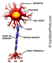 Celda neuronal