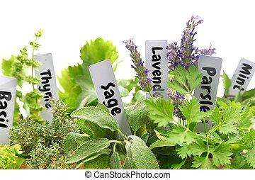 Cerca de hierbas frescas con etiquetas con nombre