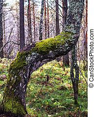 Cerca de Moss en el árbol.