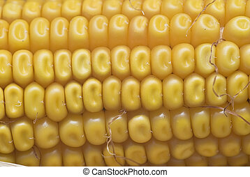 Cerca de orejas de maíz.
