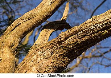 Cerca de viejas ramas en el árbol
