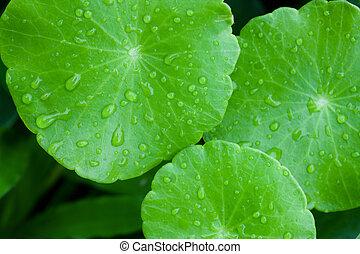 Cercano de hoja verde con gotas de agua