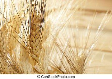 Cereal de trigo de oro, todavía la vida