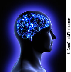 cerebro, actividad
