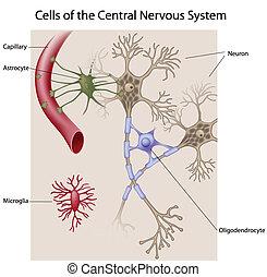 cerebro, células