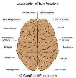 cerebro, eps8, funciones