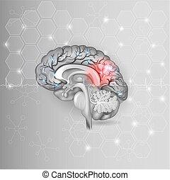 Cerebro humano con luz roja abstracta, luz gris hexágono y cardiograma normal