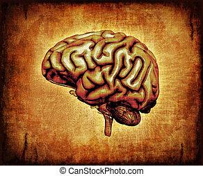 Cerebro humano en pergamino