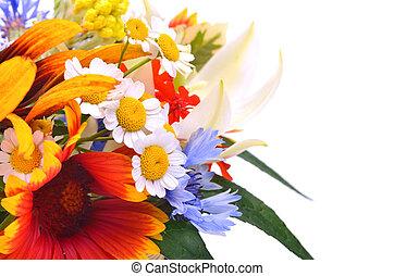 chamomiles, wildflowers, crisantemos, hermoso, cornflower