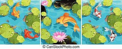 charca, natación, escena, pez