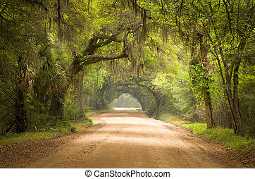 Charlestón de la calle Botánica Botánica, plantación de musgo español edisto Island en el sur, árboles de roble