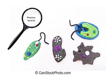 chlamydomonas, paramecium, protozoos, más, euglena, bacteria., ameba, bacteria:, famoso, simple