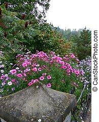 Chrysanthemum a largo plazo
