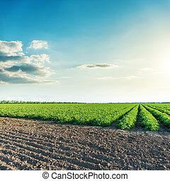 Cielo azul profundo al atardecer sobre campos de agricultura