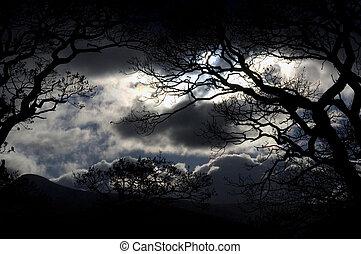 cielo, distrito de lago, noche