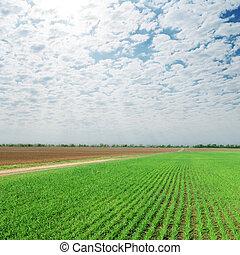 Cielo nublado sobre campo verde agricultura